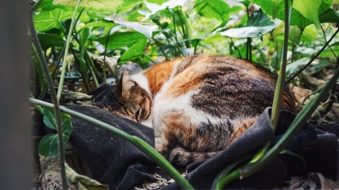 Sleeping amongst the leaves